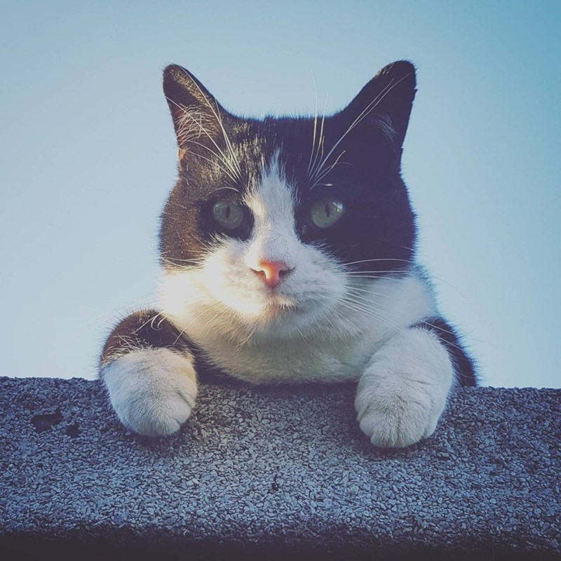 sunlight Cats - 8822029568