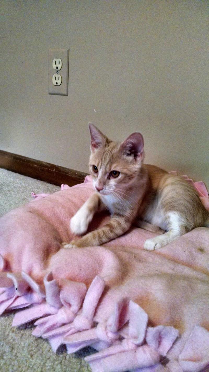 Meowth Cats - 8822041856