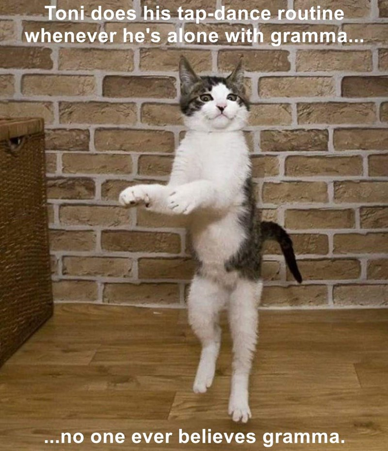 Toni does his tap-dance routine whenever he's alone with gramma...   ...no one ever believes gramma.