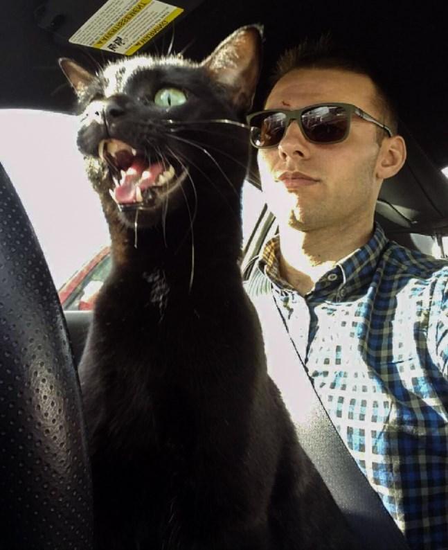 car,Cats