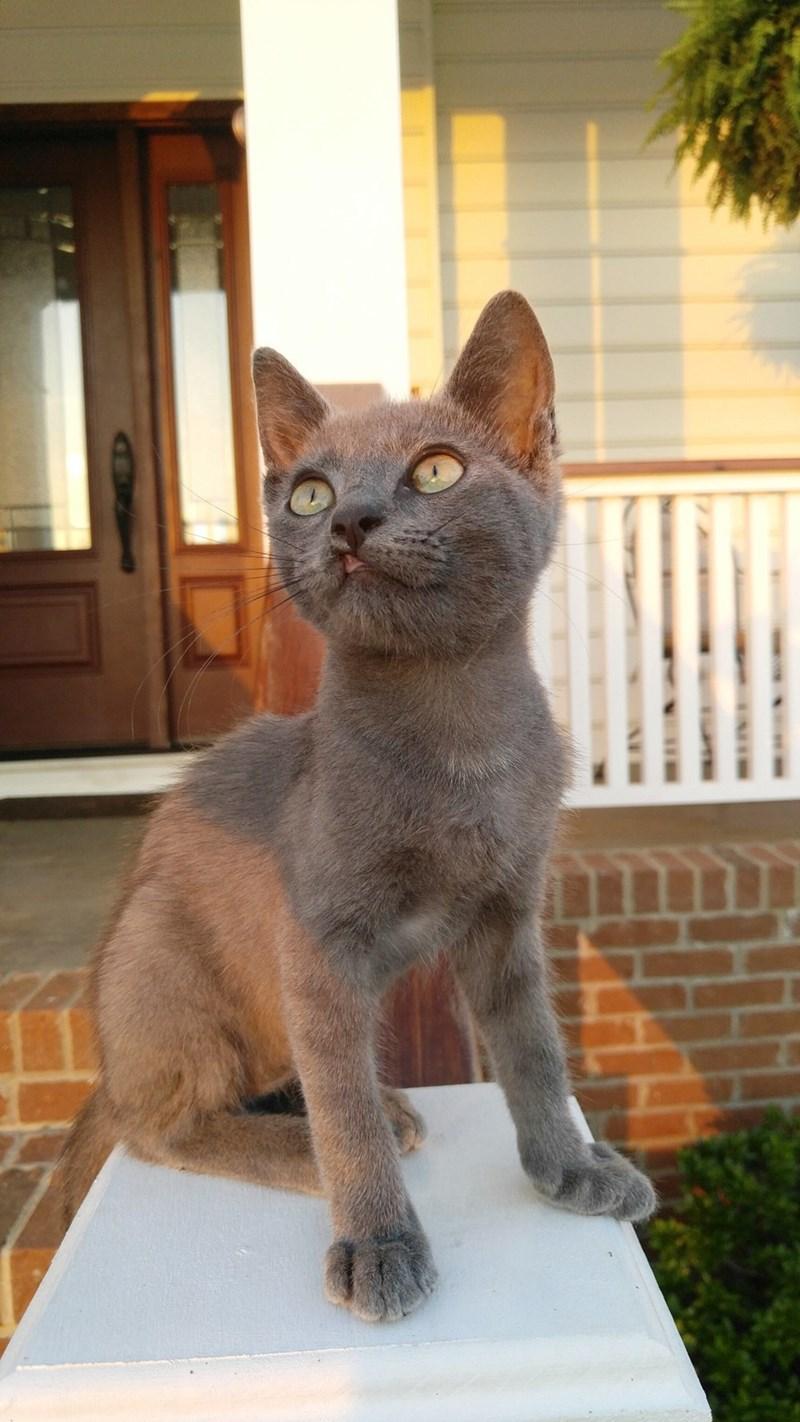 kitten Cats cleft lip - 8822083072