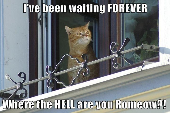 I've been waiting FOREVER  Where the HELL are you Romeow?!