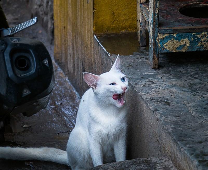 Cats - 8822146816