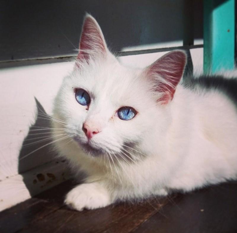 eyes sunlight Cats - 8822275584