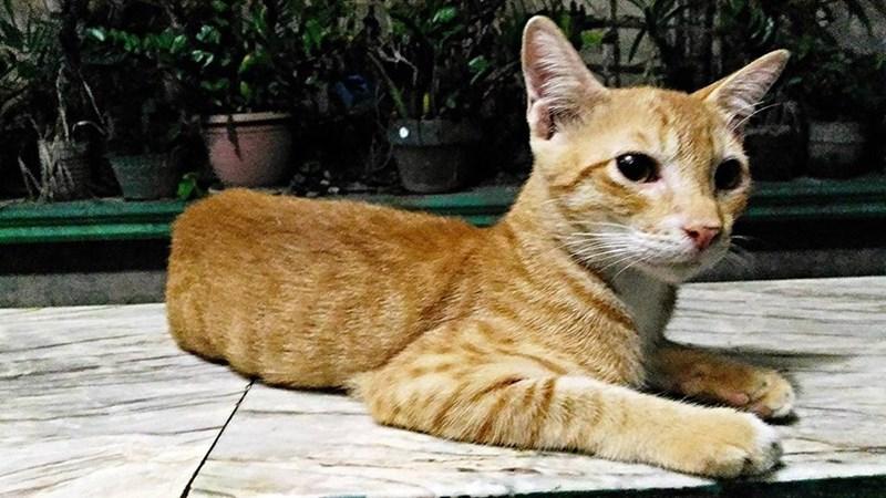 Cats - 8822292736