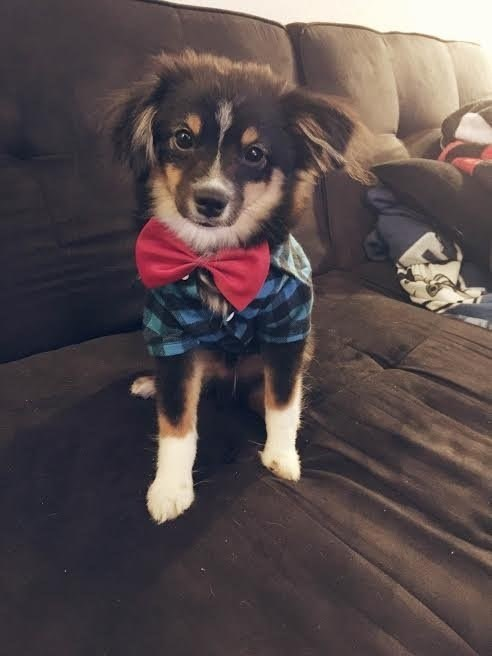 dapper dog does not appreciate being called cute