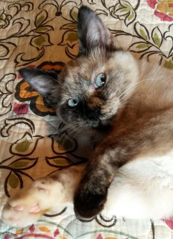 eyes Cats - 8822398208
