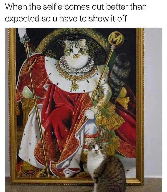 cats are basically royalty