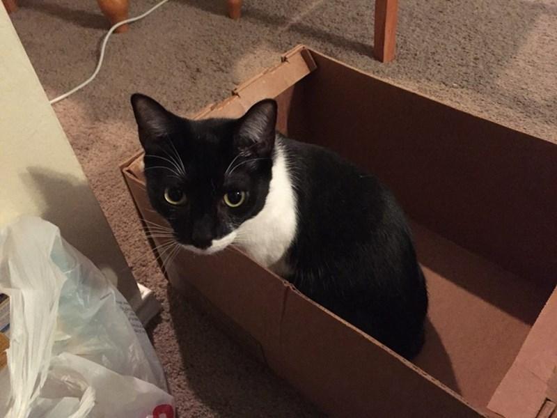 box Cats - 8822460160