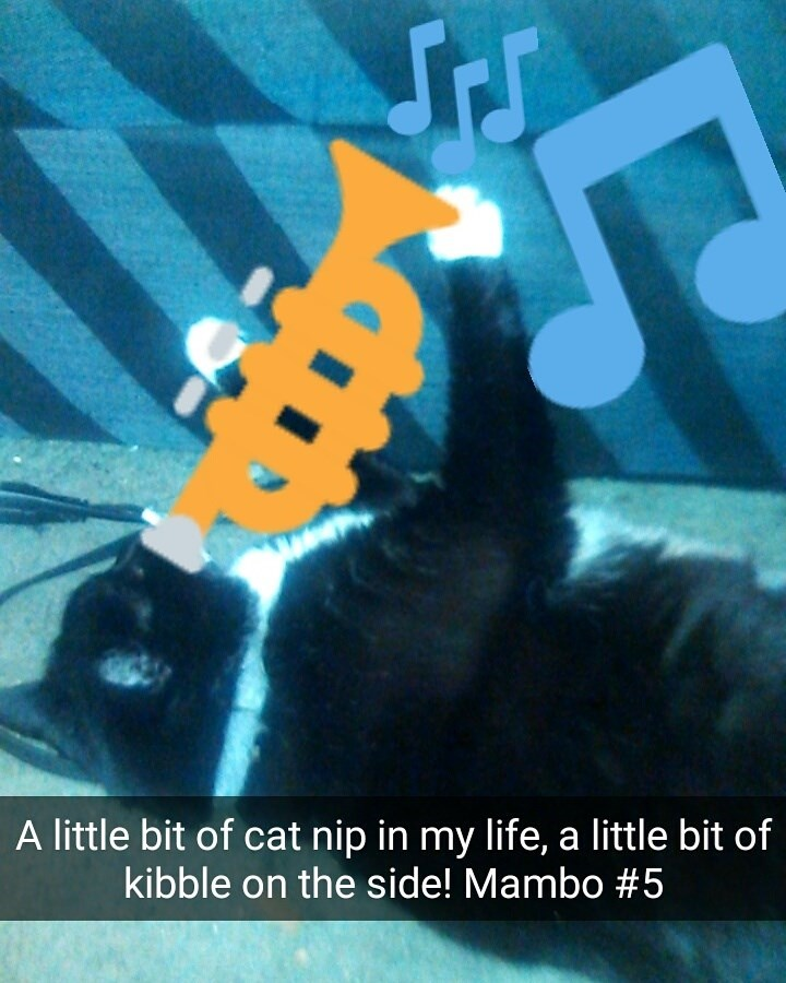 Artwork of a cat playing the trumpet like Mambo #5