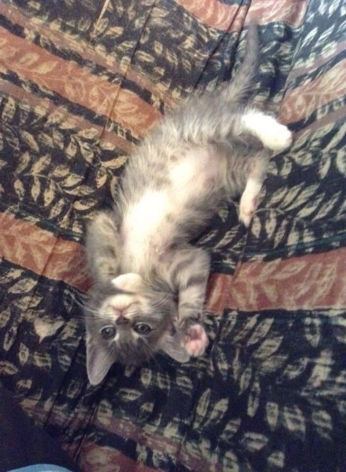 kitten Cats - 8822564864