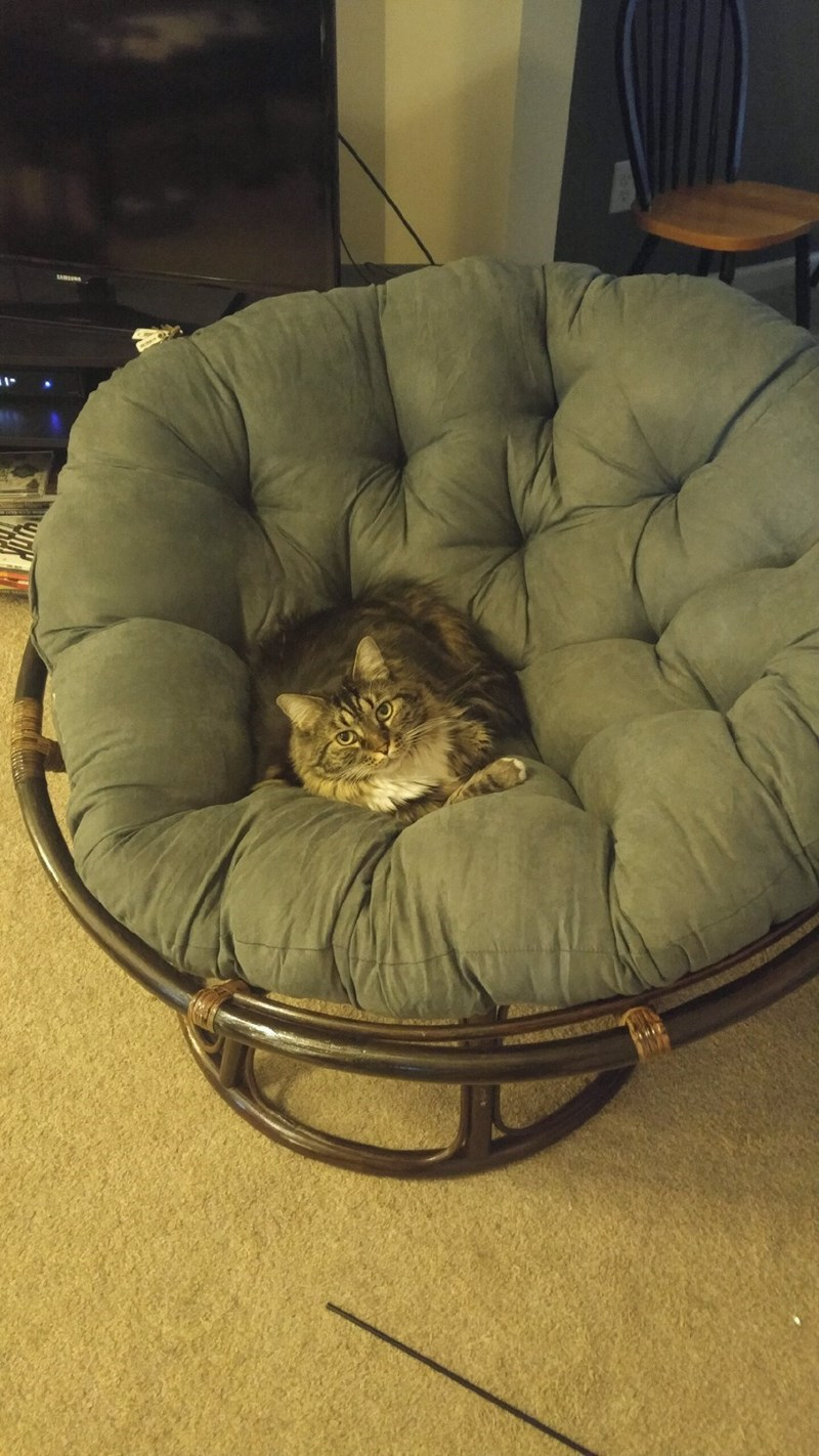 chair,Cats