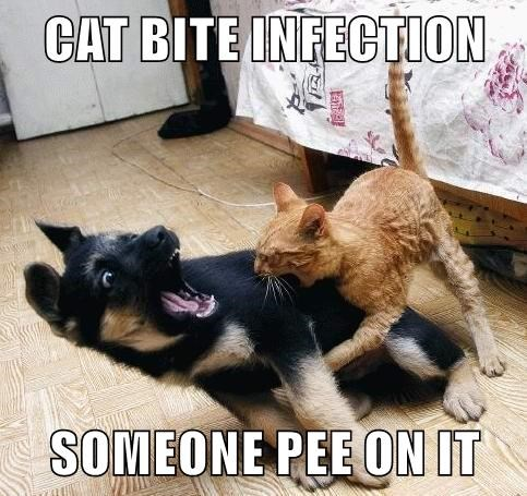 animals caption kitten bite infection pee puppy