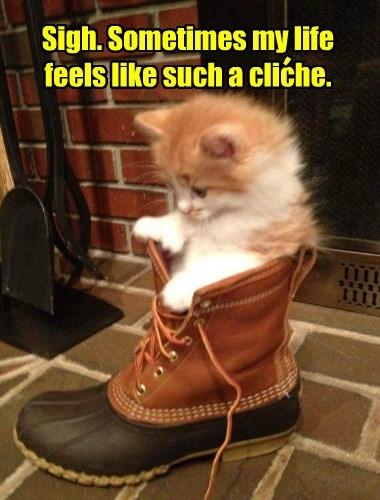 Kitten woes