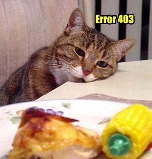 403 cat caption error - 8822633472