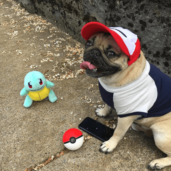when a pug catches more pokemon than you