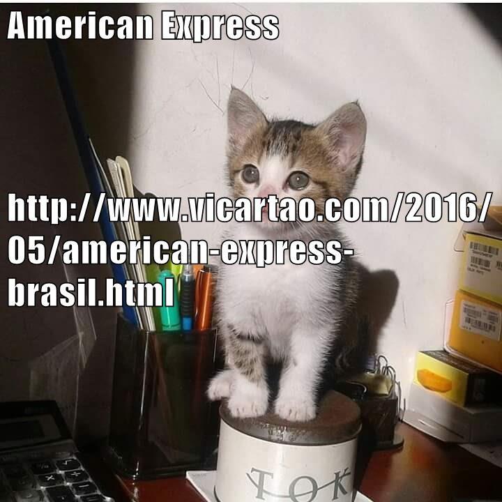 animals - 8822670080