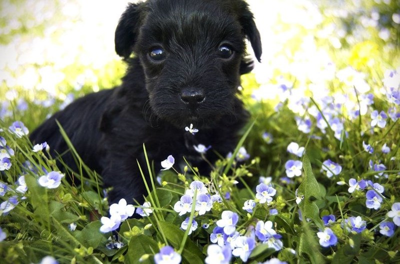 field of pup