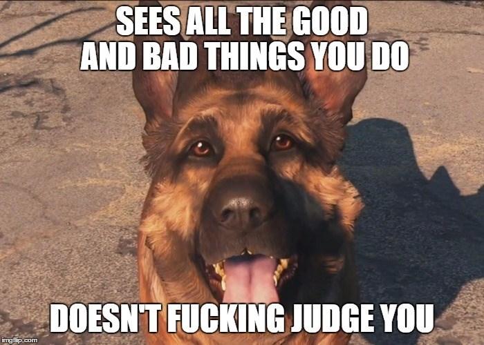 video-games-fallout-logic-dogmeat-the-best-follower