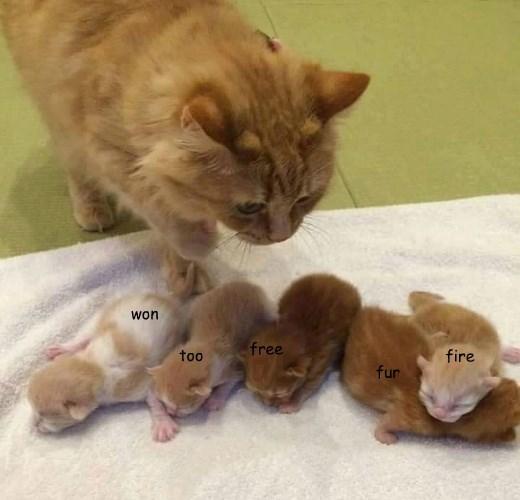 fur cat too fire kitten won caption free - 8822937088