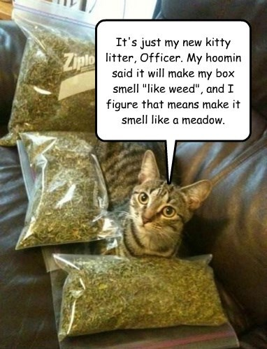 "It's just my new kitty litter, Officer. My hoomin said it will make my box smell ""like weed"", and I figure that means make it smell like a meadow."