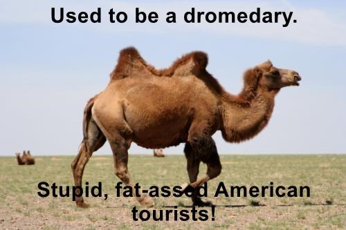 Used to be a dromedary.  Stupid, fat-assed American tourists!