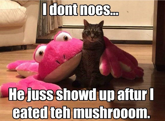 I dont noes... He juss showd up aftur I eated teh mushrooom.