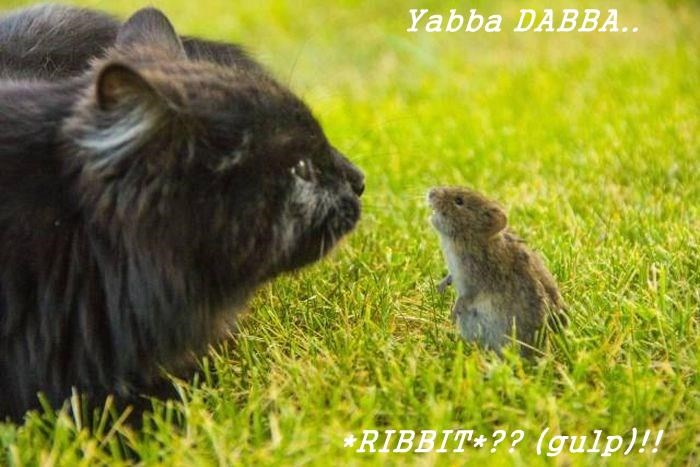 Yabba DABBA..                              *RIBBIT*?? (gulp)!!