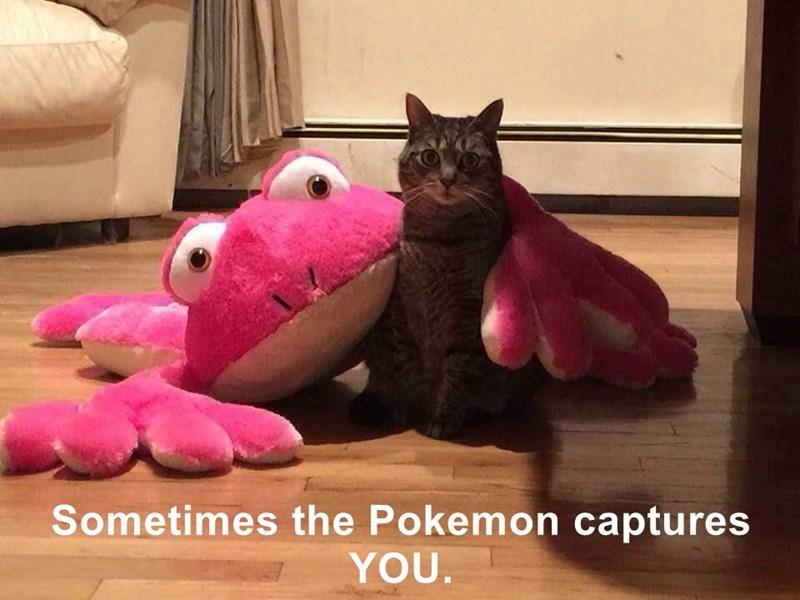 animals you cat Pokémon captures caption - 8822993664
