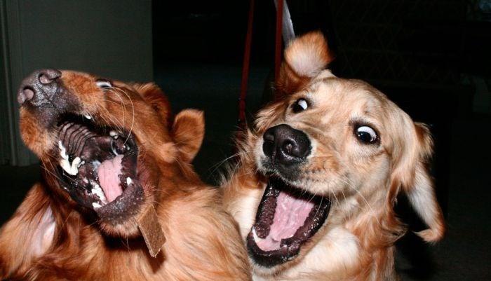 dogs lol - 8823015680