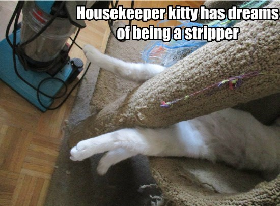 Housekeeper kitty has dreams  of being a stripper