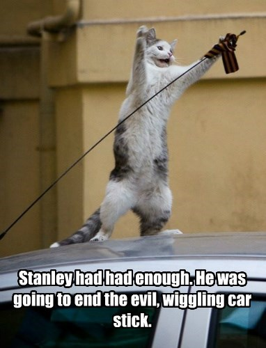 Stanley had had enough. He was going to end the evil, wiggling car stick.
