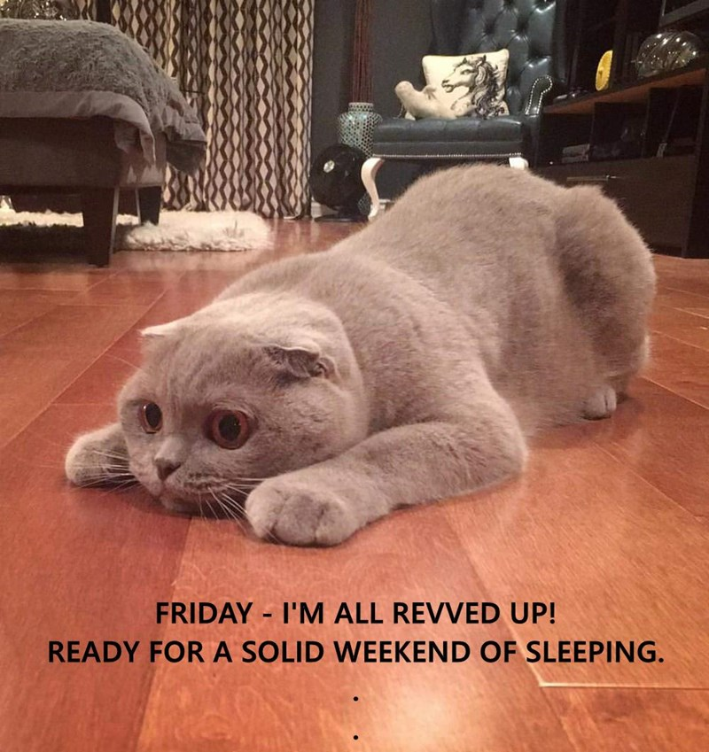 FRIDAY - I'M ALL REVVED UP!                                                                         READY FOR A SOLID WEEKEND OF SLEEPING.                                                                      .