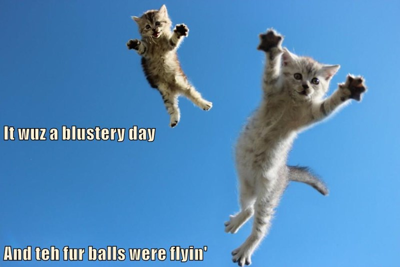 Maybe I Should Tie Strings To My kittehs And Fly Them Like Kites!