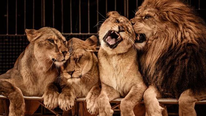 wild animals circus ban