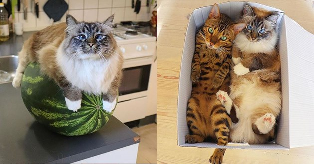 instagram cats funny videos