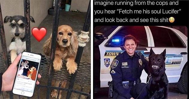 doggo dog memes funny