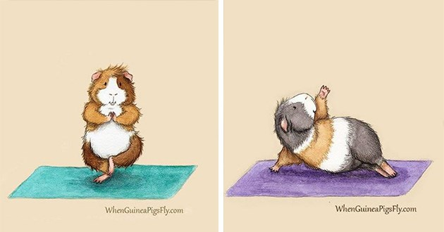 guinea pigs yoga art