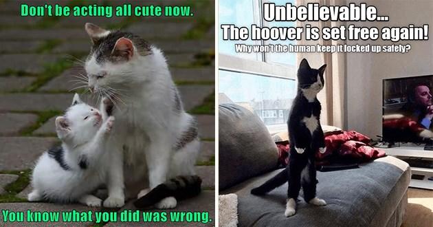 cats lolcats funny memes