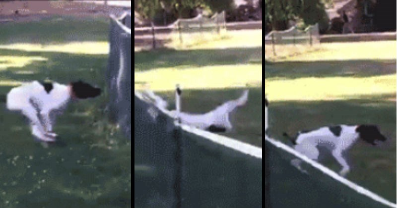 wtf FAIL gifs awesome save nice funny win lucky fall - 8833029