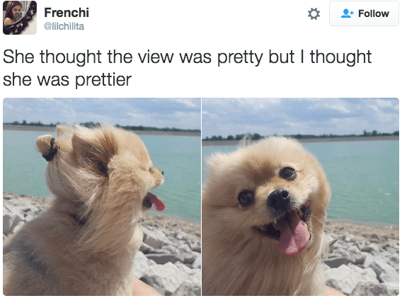 dogs twitter view compliments pretty
