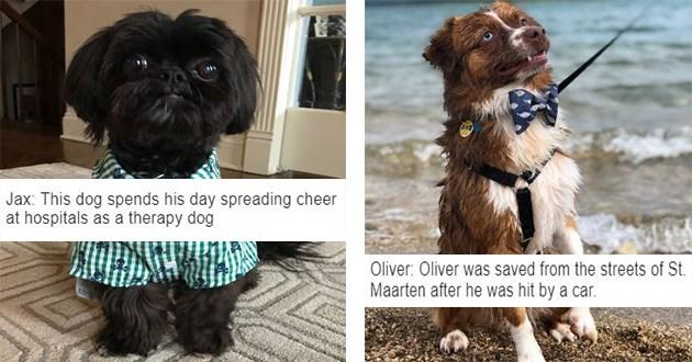 cutest rescue dog contest