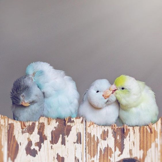 birds cute aww photography