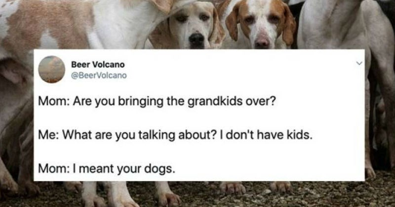 embarrassing parents, parents referring to their child's dogs as grand kids