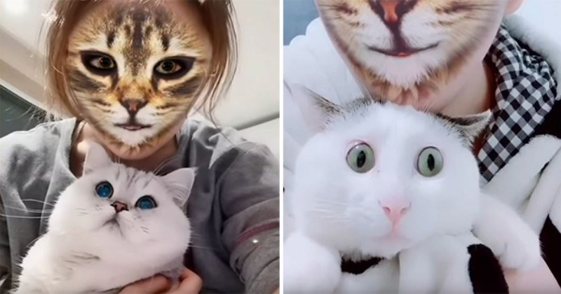 17 Year Old Makes Hilarious Tiktok Video Of Her Cat Dancing To Mr Sandman And 1 5 Million People Love It Internet Cats Dancing Cat Sandman