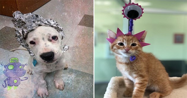 cats dogs aliens area 51