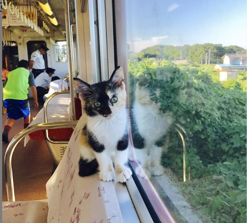Japanese Railway Allows Its Passengers To Enjoy The World's First Cat Cafe On a Train While Adopting Kittens