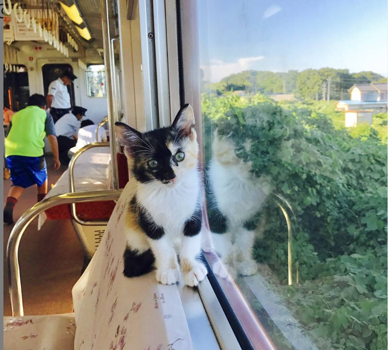 cat on train window
