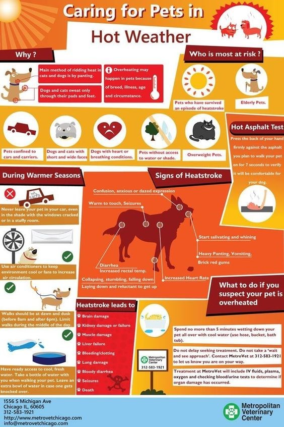 pets safety tips