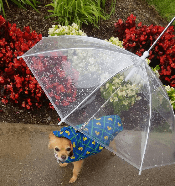 Dog leash umbrella that is sold on Amazon
